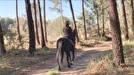 Chalet bois à Azur au coeur de la pinède landaise