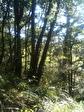 Bidache - Vente terrain boisé - Au calme